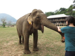 Here I am feeding one of the elephants.