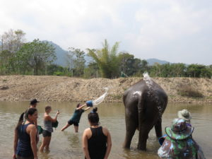 Here is our group, helping to bathe an elephant.