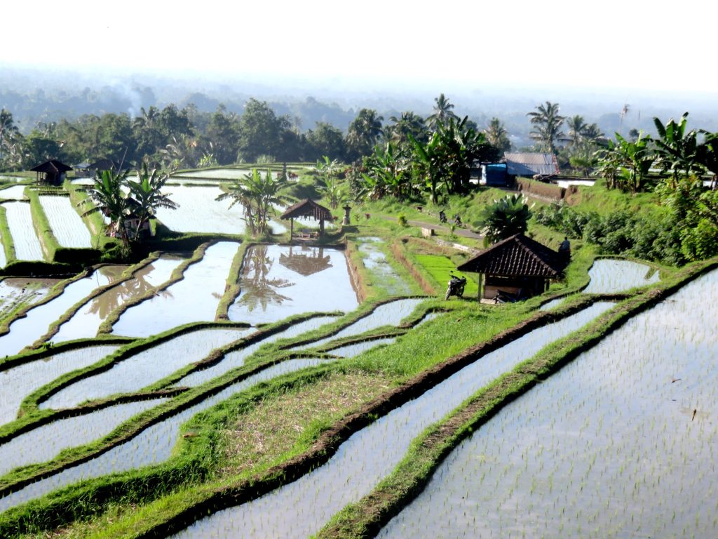 the chillhouse in bali ricefields2